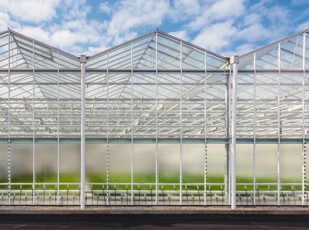 Cannabis-Facility-Design