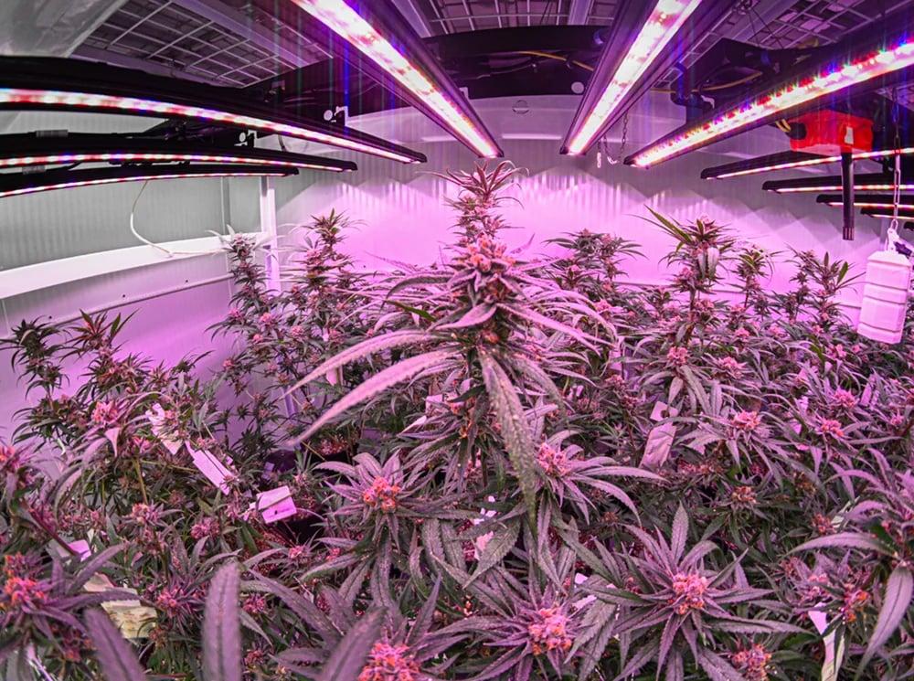 Cannabis-Grower-Energy-Rebates