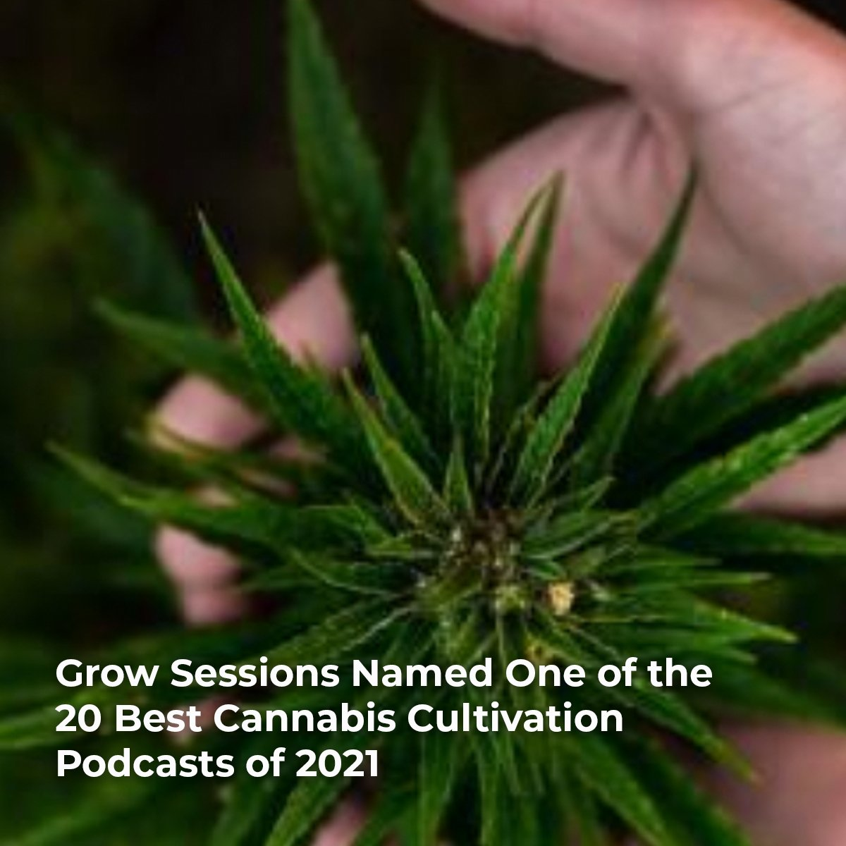 Best-Cannabis-Podcasts-of-2021